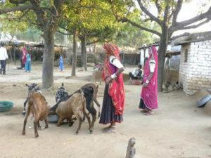 rabari-village-2